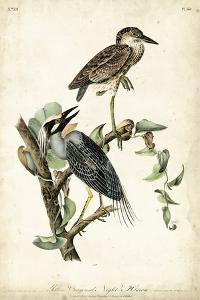 Night Heron by John James Audubon