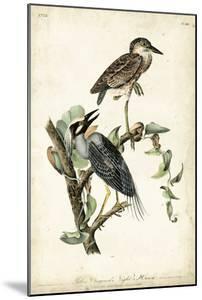 Night Heron by John James Audubon