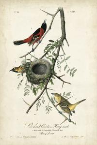Orchard Orioles by John James Audubon