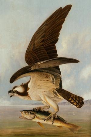 Osprey and Weakfish, 1829