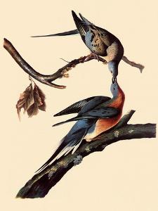 Passenger Pigeons by John James Audubon
