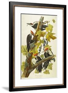 Pileated Woodpecker (Dryocopus Pileatus), Plate Cxi, from 'The Birds of America' by John James Audubon
