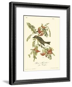 Pipiry Flycatcher by John James Audubon