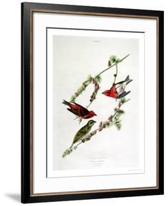 "Purple Finch, from ""Birds of America"" by John James Audubon"