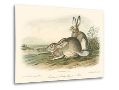 Rocky Mountain Hare