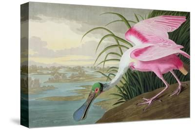 Roseate Spoonbill, Platalea Leucorodia, from 'The Birds of America', 1836