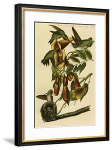 Ruby Throated Humming Bird by John James Audubon