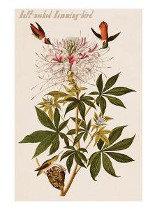 Ruff-Necked Humming-Bird by John James Audubon