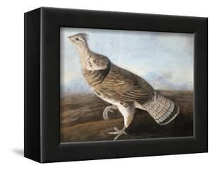 Ruffed Goose, C.1812 by John James Audubon