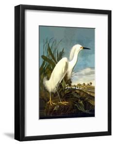 Snowy Egret by John James Audubon