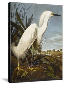 Snowy Heron or White Egret / Snowy Egret (Egretta Thula), Plate CCKLII, from 'The Birds of America' by John James Audubon