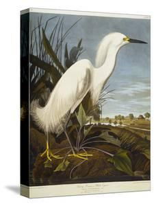 Snowy Heron or White Egret / Snowy Egret by John James Audubon