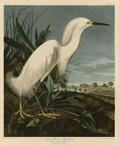 Snowy Heron or White Egret by John James Audubon