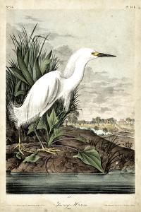 Snowy Heron by John James Audubon