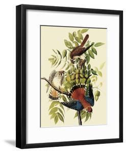 Sparrow Hawks by John James Audubon