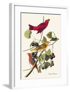 Summer Tanager by John James Audubon