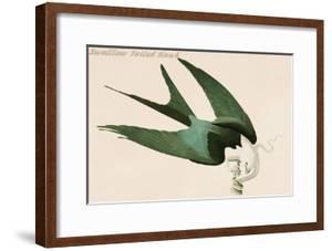 Swalllow Tailed Hawk by John James Audubon