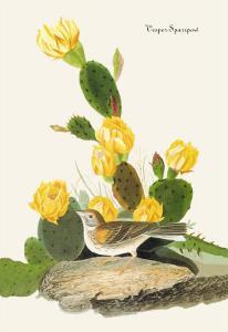 Vesper Sparrow by John James Audubon