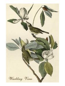 Warbling Vireo by John James Audubon