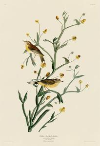 Yellow Red-Poll Warbler by John James Audubon