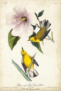Yellow Swamp Warbler by John James Audubon