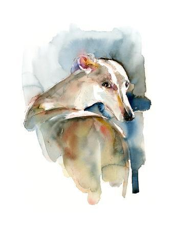 Greyhound Hope, 2016