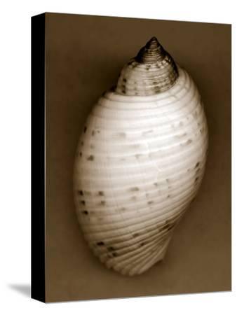 Bonnet Shell