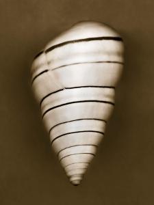 Candy Cane Shell by John Kuss