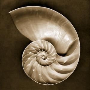Half Nautilus by John Kuss