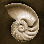 Yellow Tail Snail-John Kuss-Photographic Print