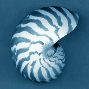 Nautilus Shell by John Kuss