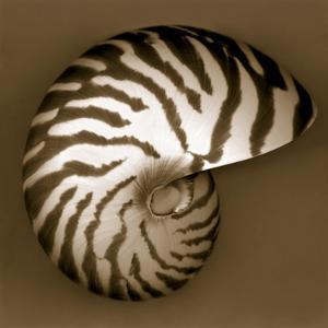 Nautilus Shell by John Kuss