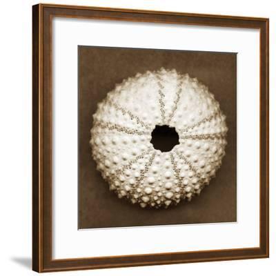 Pink Sea Urchin