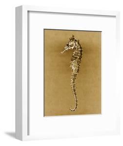 Sea Horse by John Kuss