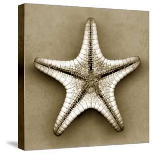Sugar Starfish Bottom by John Kuss