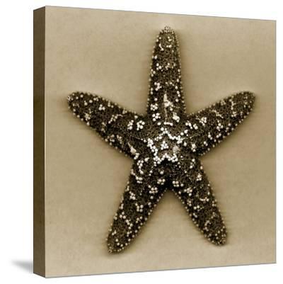 Sugar Starfish