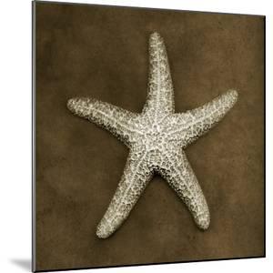 Sugar Starfish by John Kuss