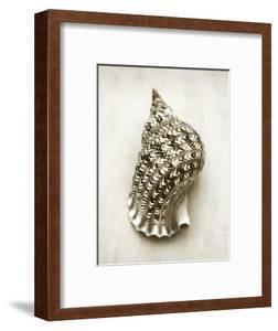 Triton Shell by John Kuss