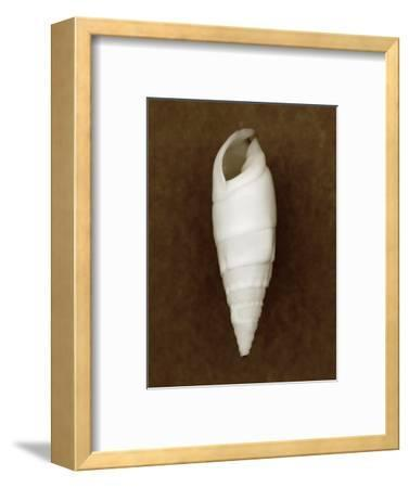 White Cerithium Shell