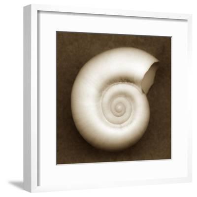 White Spiral Shell
