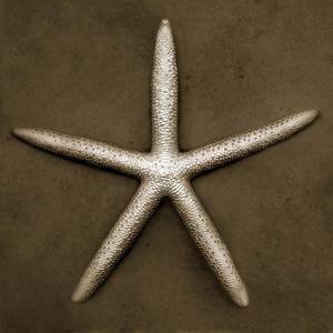 White Starfish by John Kuss