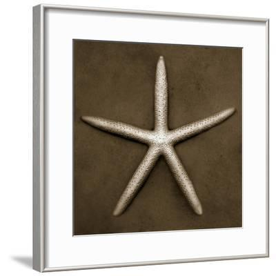 White Starfish