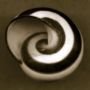 Yellow Tail Snail by John Kuss