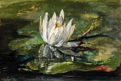 Water Lily in Sunlight, 1881