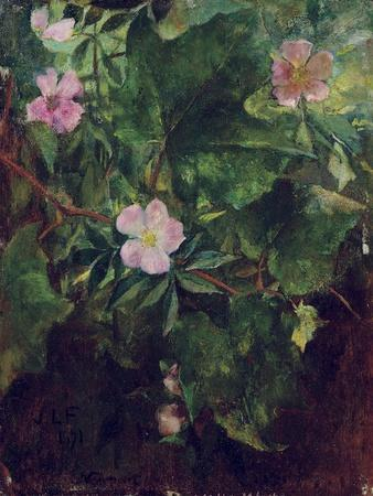 Wild Rose and Grape Vine, Study from Nature, 1871