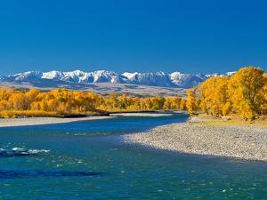 Fall Colors Along the Yellowstone River Below the Absaroka Mountains Near Springdale, Montana by John Lambing