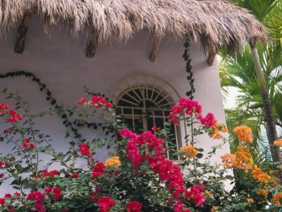 Bougenvilla Blooms Underneath a Thatch Roof, Puerto Vallarta, Mexico