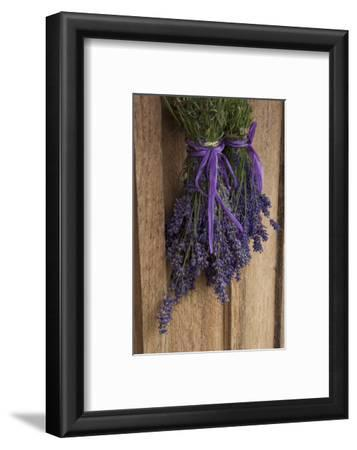 Bunches of Lavender Drying Shed at Lavender Festival, Sequim, Washington, USA