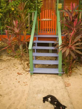 Cat Sleeping By Entrance, Placencia, Stann Creek District, Belize
