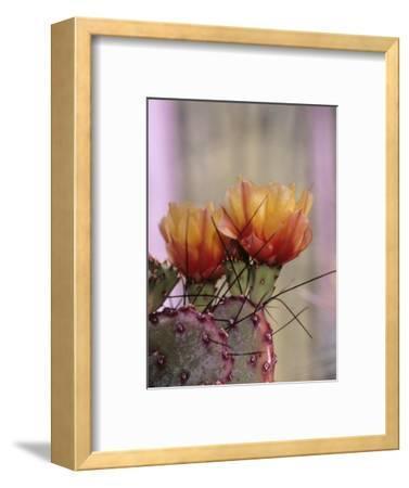 Flower, Tucson Botanical Gardens, Arizona, USA